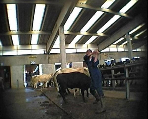 3534  - 6 61 - Sự thật đáng sợ về sữa bò dành cho cha mẹ coi sữa là thần dược