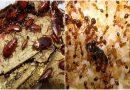 10 mẹo đơn giản giúp nhà em lúc nào cũng sạch bóng, mấy loại gián, kiến, muỗi khóc thét không dám bén mảng tới gần